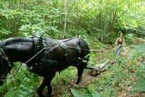 horse log extraction